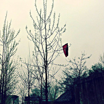 red flag in leafless tree - silent red flags, kids distancing themselves and  never joining in